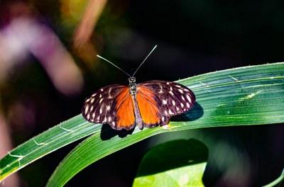 Chairière – Ouverture au public de la réserve naturelle Bois sous les Granges