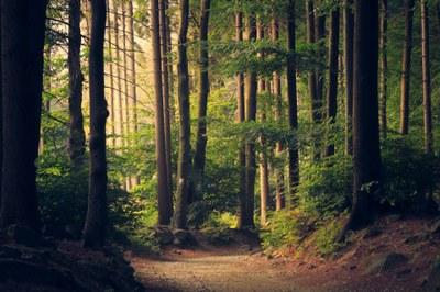 Mouzaive – Visite et recensement des plantes de la réserve naturelle du Rebais